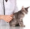 Ветеринарные клиники в Волжске